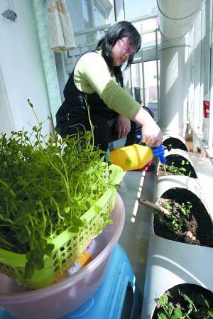 利用自家阳台种菜已成为不少城市居民的乐趣。图/CFP