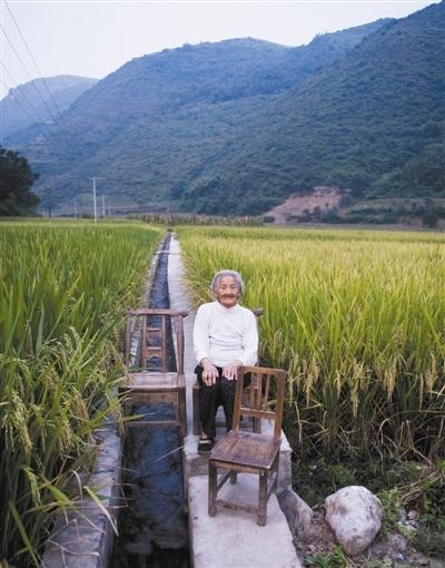白柳镇,87岁的柳树珍在水稻田边。她的老伴去世,儿子在外打工。