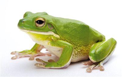 养青蛙步骤图解