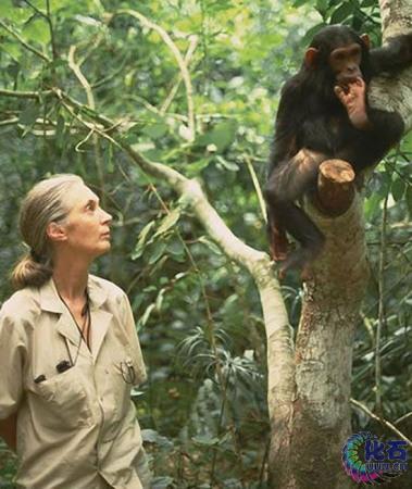 到热带雨林中与野生动物生活在一起