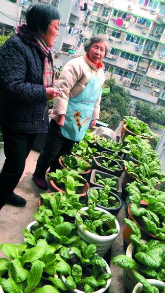 中国式生态社区建设先行者