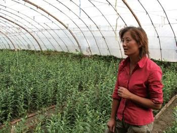 杨小萍通过小额信贷创业的故事
