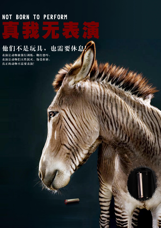 2013年亚洲动物基金公益广告设计大赛复活作品